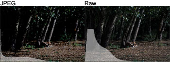 Raw vs JPEG Exposure