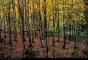 Hamedan, Iran - Autumn in Hamedan 26