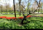 Razavi Khorasan, Iran - Mashhad, Bulbous Flowers Festival 08