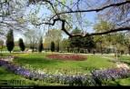 Razavi Khorasan, Iran - Mashhad, Bulbous Flowers Festival 15