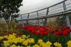 Tehran, Iran - Tabiat pedestrian bridge 01