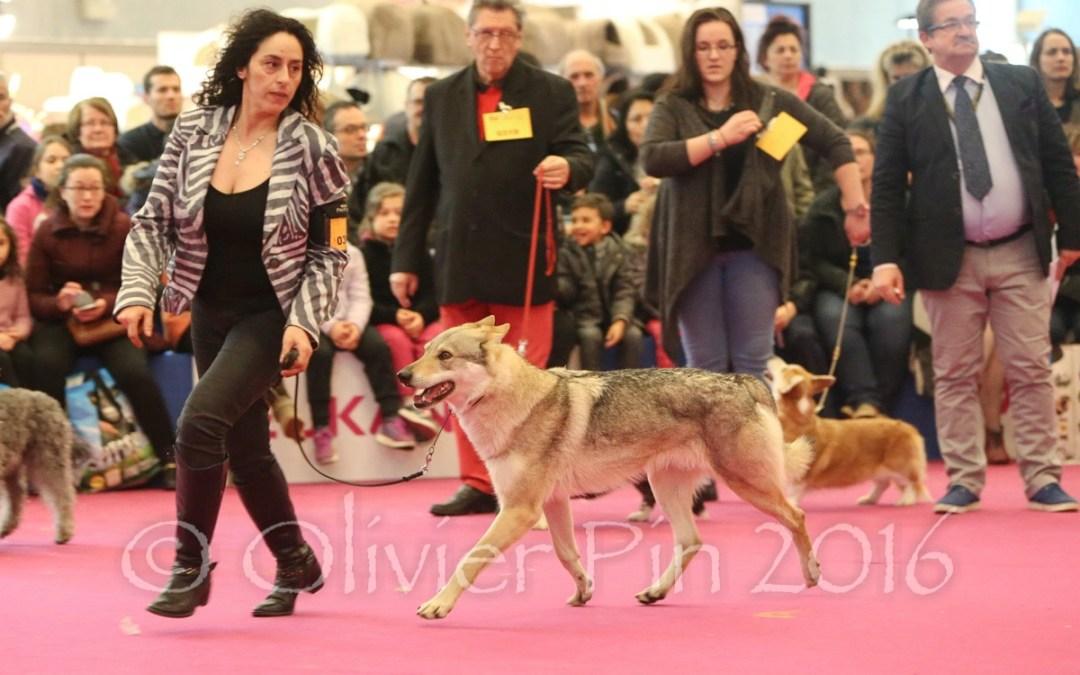 Expos canine à Pontoise