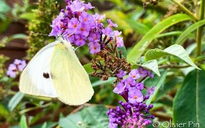 Jaune papillon !