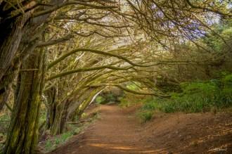 Chemin ombragé vers la plage d'Herlin.
