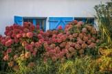 Maison fleurie Belle-îloise.