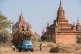 Moissonneurs à Bagan