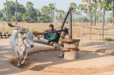 Fabrication d'huile d'arachide vers Bagan