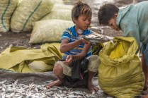 Marché au poisson de Sittwe - Arakan