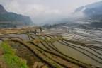 rizières - Yunna - Chine