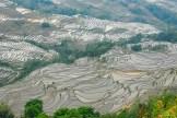 rizières - Bada - Yunna - Chine