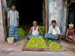 Vendeur de fruits- Inde.