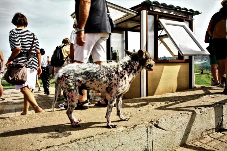 Kranker, verwahrloster Straßenhund inmitten von Touristen in der Nähe von Havanna, Kuba. November 2015 // Neglected and sick street dog standing in the middle of a crowd of tourists close to Havanna, Cuba. November 2015