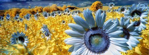 Blue Suns, Henry H SMith