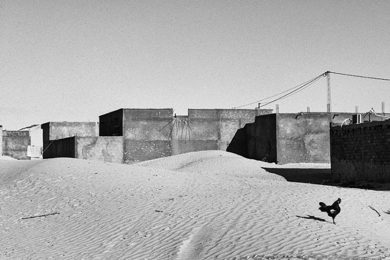 © Zied Ben Romdhane