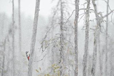 ©Gil GAUTIER - PRIX DU CONSEIL DÉPARTEMENTAL Oiseaux sauvages de pleine nature