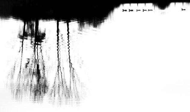 17 ∏ Diego GIRVES Prix Jeune Graphisme Forme Et Matiere De La Nature