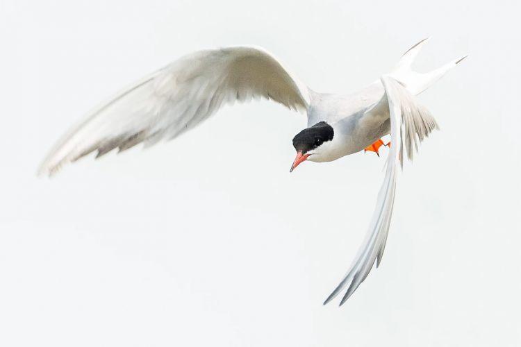 Priveworkshop vogels