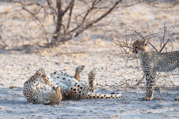 Workshop Safari Fotografie