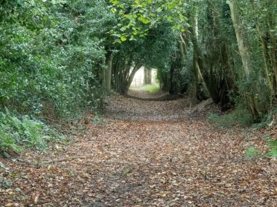 Windlesham  - Footpath in October 2019