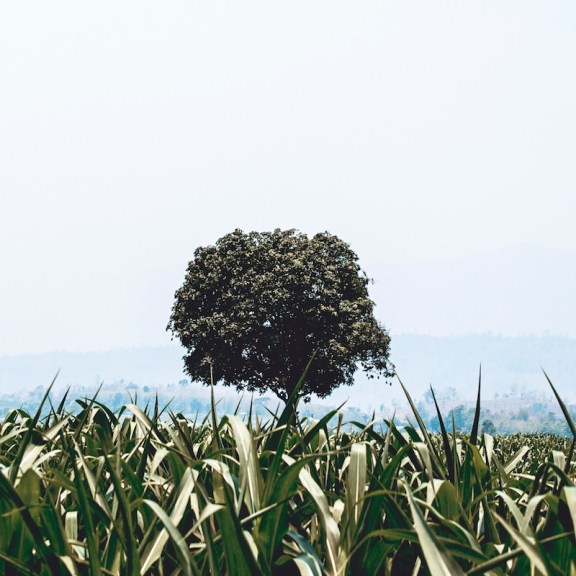 Start - Plant a Tree - Chinese Proverb - by Peter Hershey