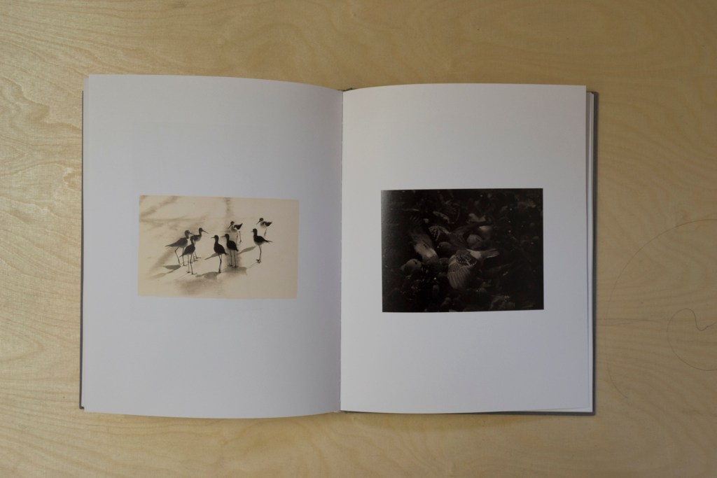 PHROOM magazine // yamamoto masao // international research platform for contemporary photography and video art