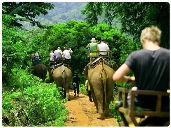elephant tours phuket