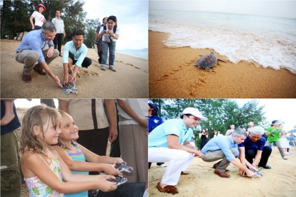 3rd Mai Khao Turtle Release Staged On 10th Anniversary Of Mai Khao Marine Turtle Foundation
