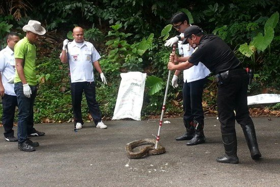 Amari Phuket holds snake rescue training