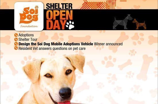 First Ever Soi Dog Open Morning for Tours and Adoptions