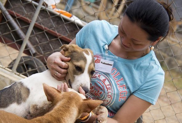 Calling all Dog Lovers of Phuket - we need your help!