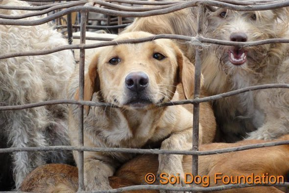 International Celebrities Take a Stand against the Thai Dog Meat Trade