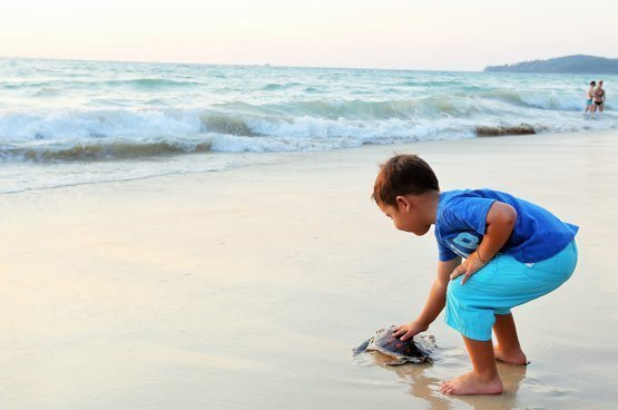 60 young sea turtles released on Phuket beach