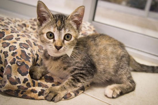 Soi Dog Foundation overflowing with kittens! New homes wanted.