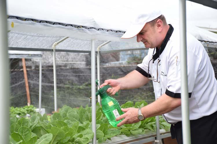 Anantara Hua Hin's New Hydroponic Farm Unearths Organic Farm To Table Freshness