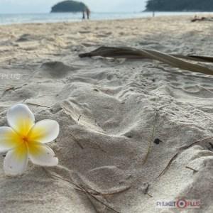 экскурсионное агентство на пляже ката