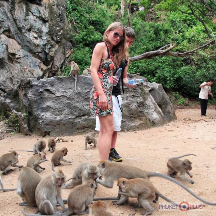 где безопасно покормить обезьян на пхукете