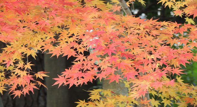 三重県の紅葉スポット