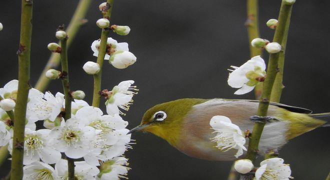 広島県の梅の名所