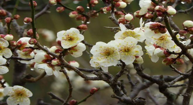 大阪府の梅の名所