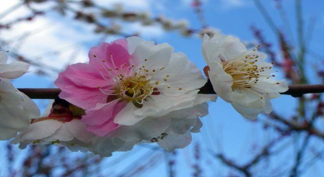 愛知県の梅の名所