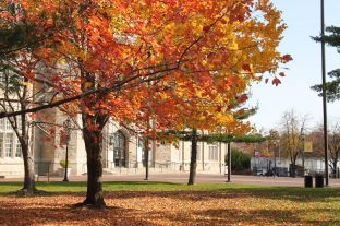 The trees on campus are in different stages of changing colors.