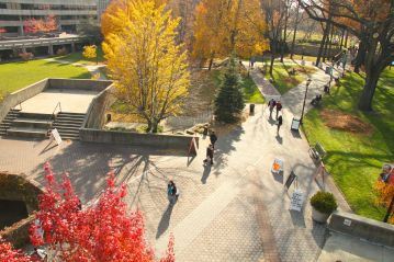 The different colored trees are creating a vibrant atmosphere on the path of the campus.