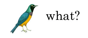 "picture of a bird with the word ""what"""