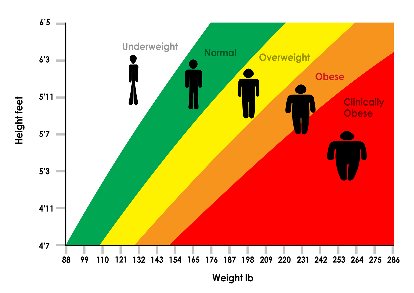 Who Invented the Body Mass Index   Physical Culture Study