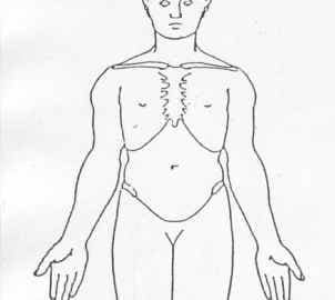 body diagram for charting