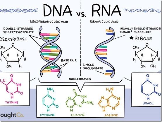 RNA-DNA