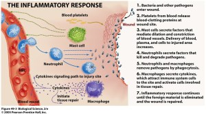 Assignment 4  the Lymphatic System  UNIT 11 PHYSIOLOGY