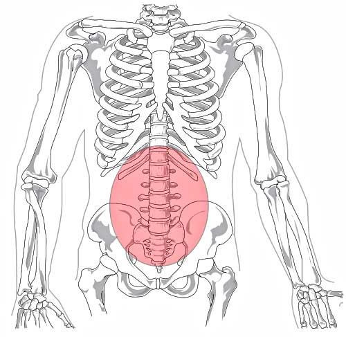 lumbar_region_in_human_skeleton