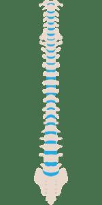 σπονδυλική στήλη πρόληψη μυοσκελετικής υγείας