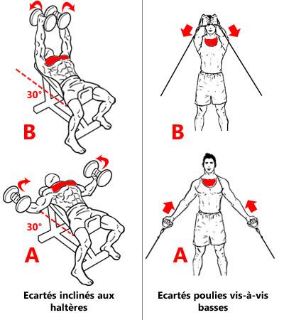 Exercices ciblant le faisceau claviculaire des pectoraux